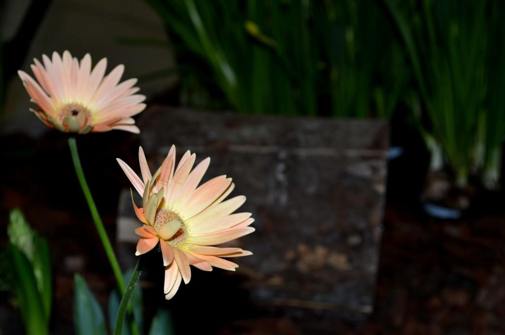 flori-de-martisor