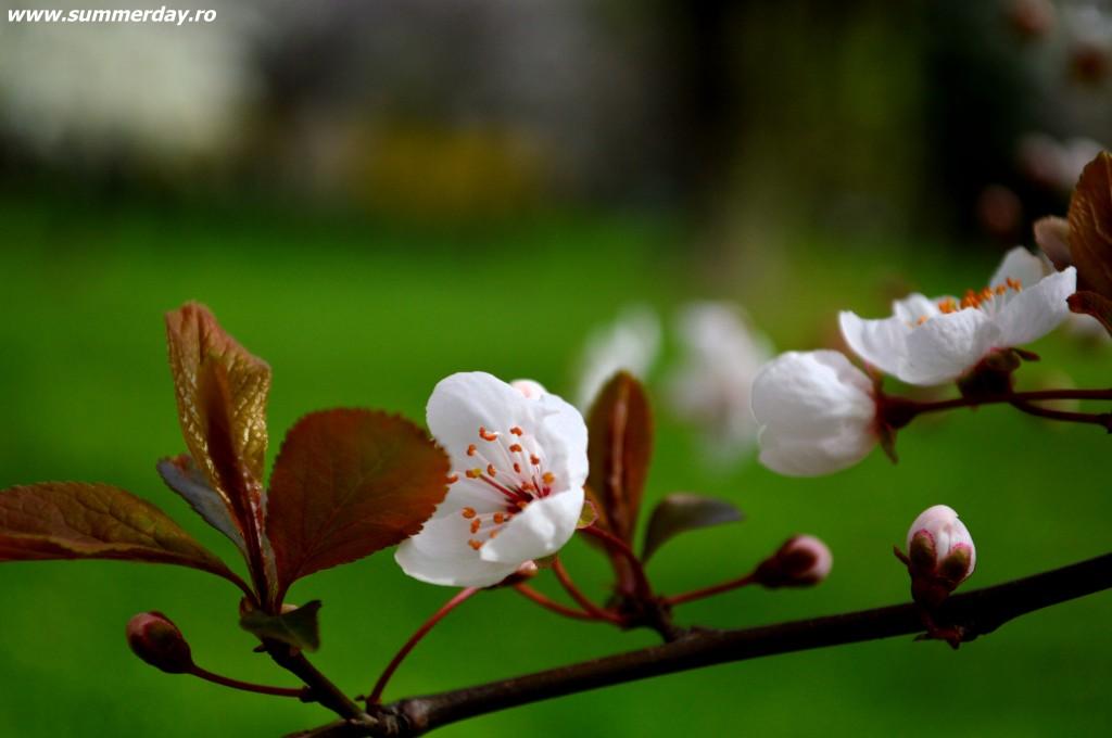 closeup-flori