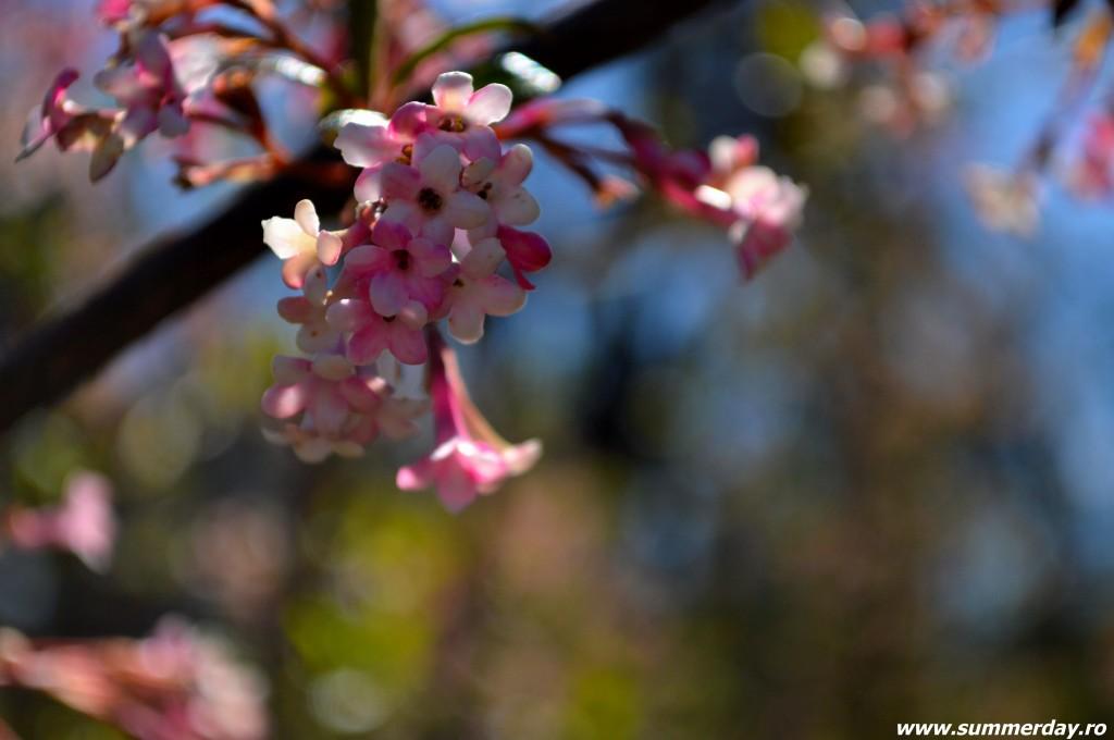poze-cu-flori-primavara