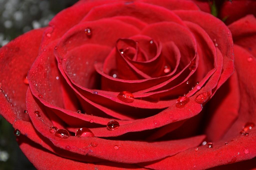 iubire-pasionala