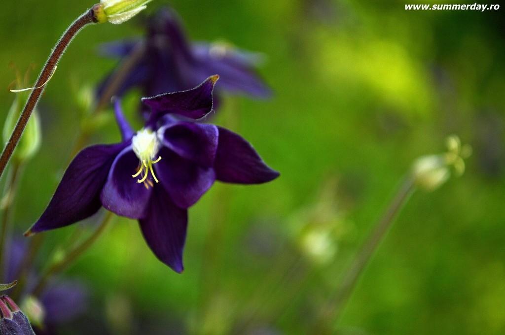 flori-albaste-superbe-de-vara