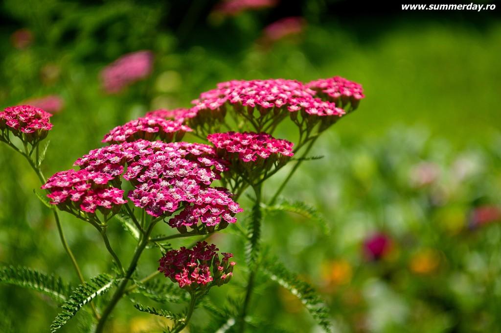 macro-flori-de-vara