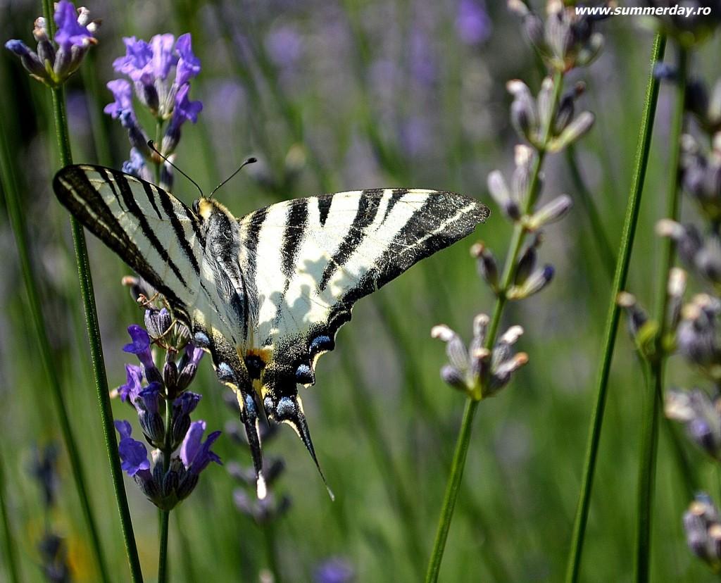 fluturi-closeup