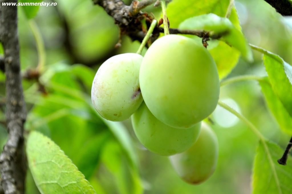 fructele-verii