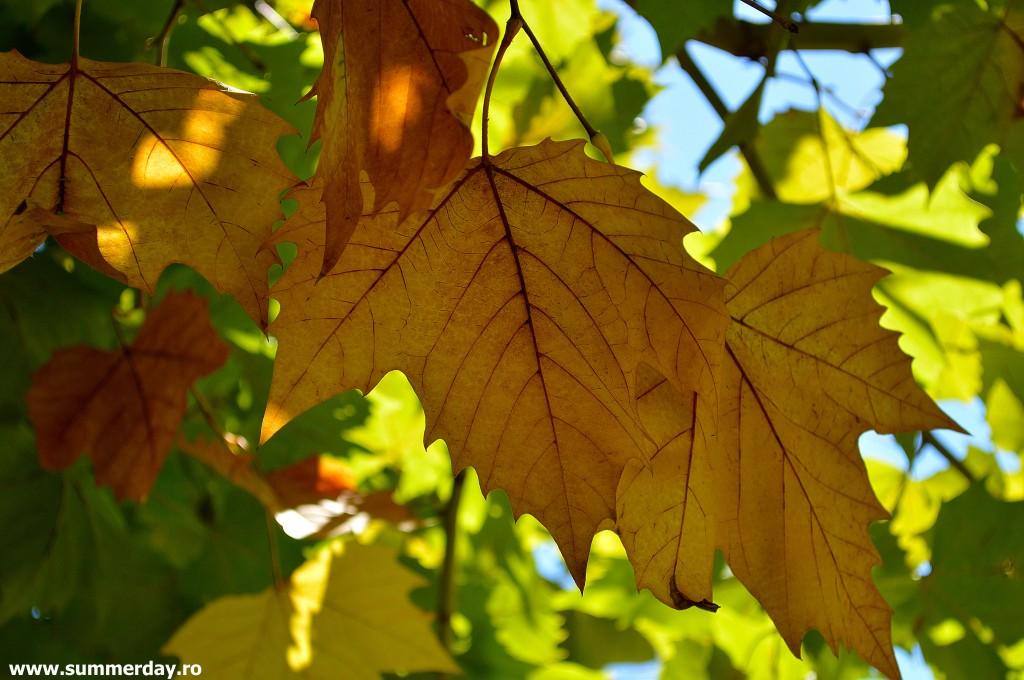 frunze-aramii