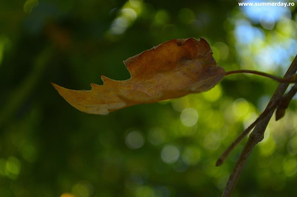 frunze-de-toamna-frumoase