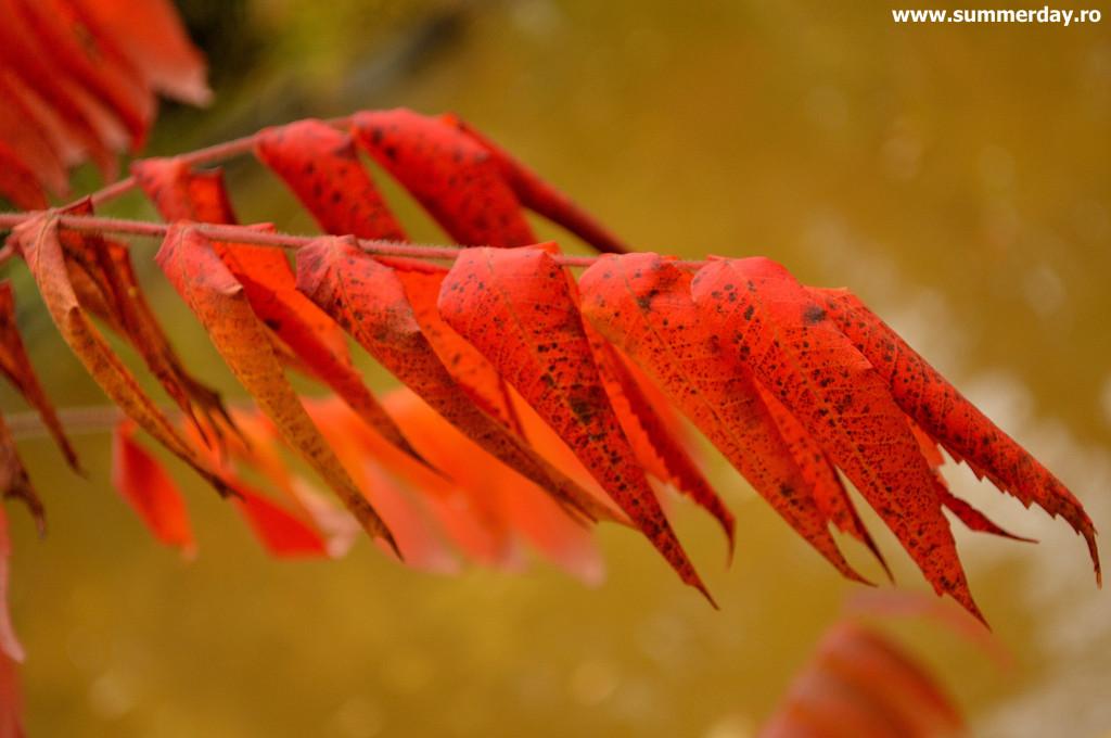 frunze-rosii