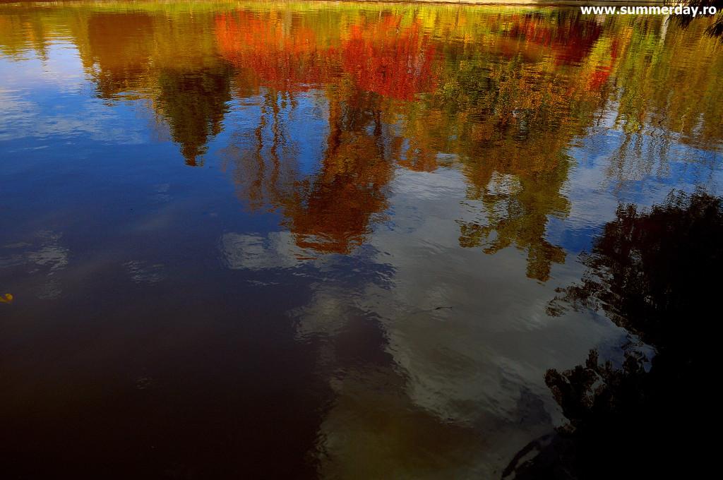 reflexii-autumnale