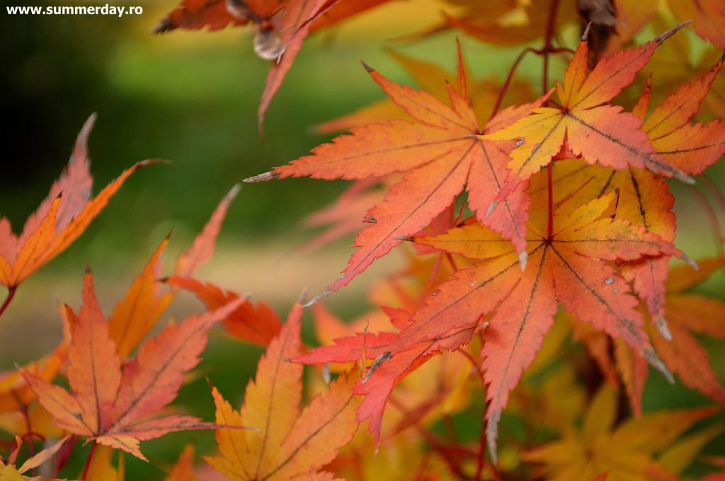 frunze-frumoase-de-toamna