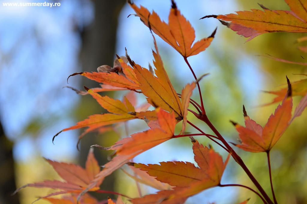 octombrie-senin