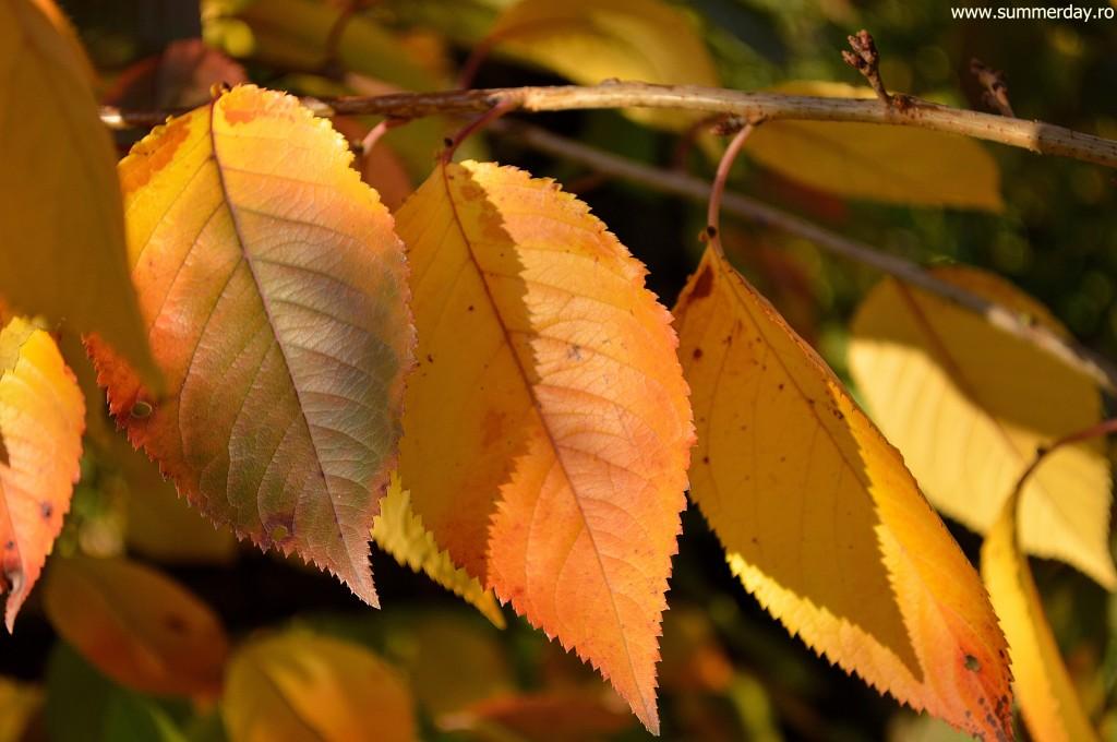 frunze-galbene-macro