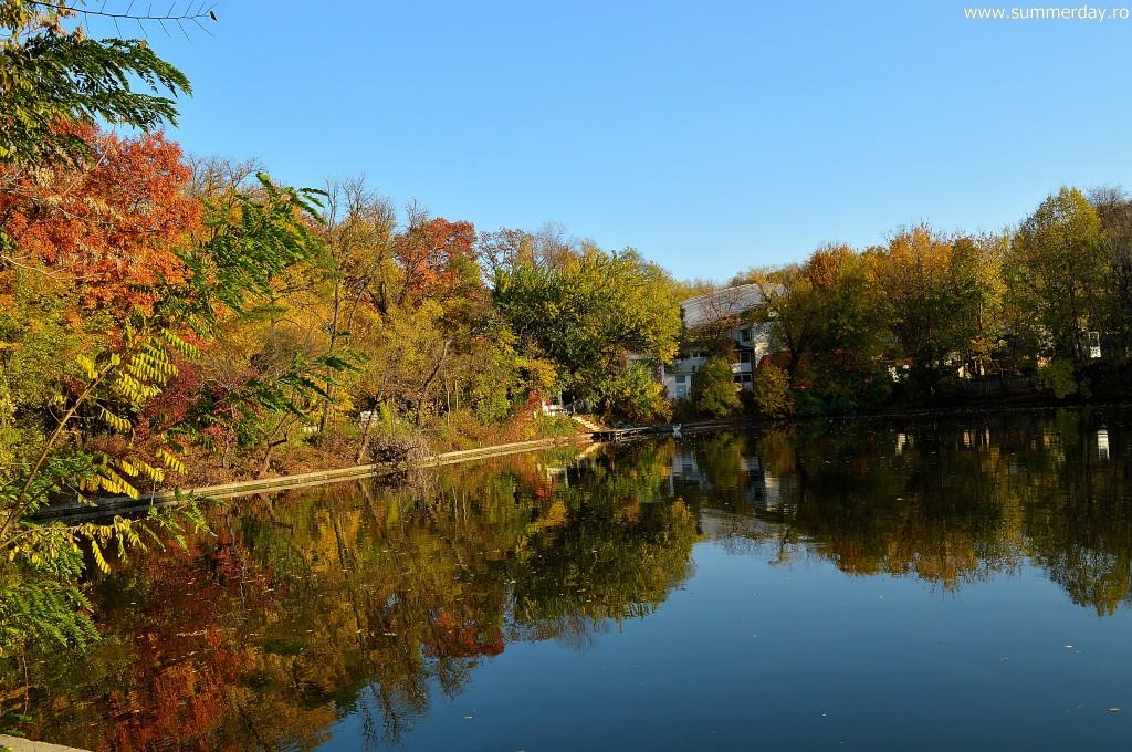 reflexii-copaci-toamna