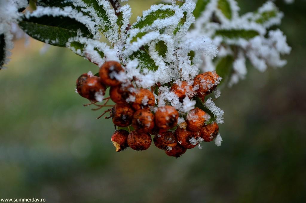 macro-iarna