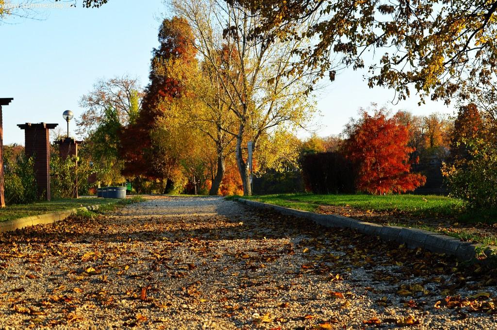 aleile-parcului-toamna