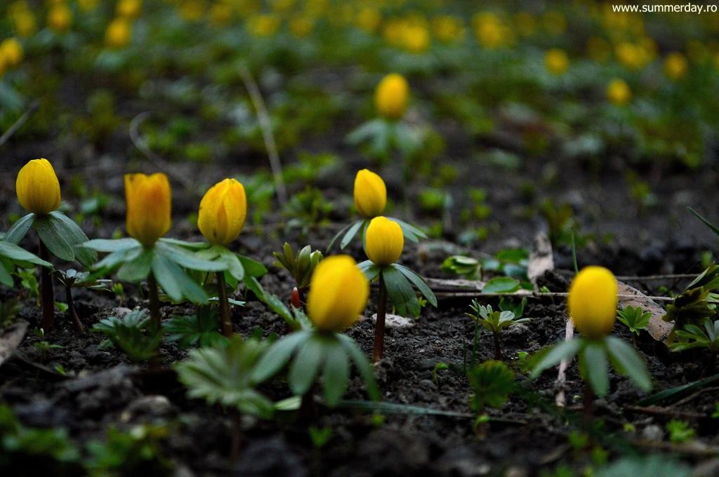 floricele-galbene-de-primavara