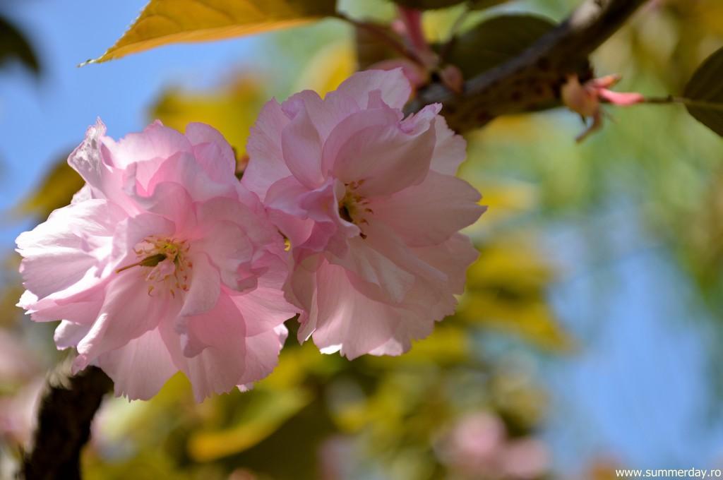 flori-de-cires-macro