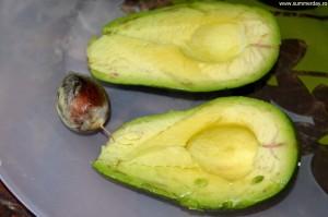 sambure-de-avocado