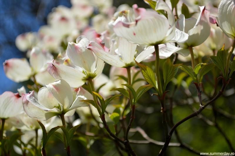 flori-delicate