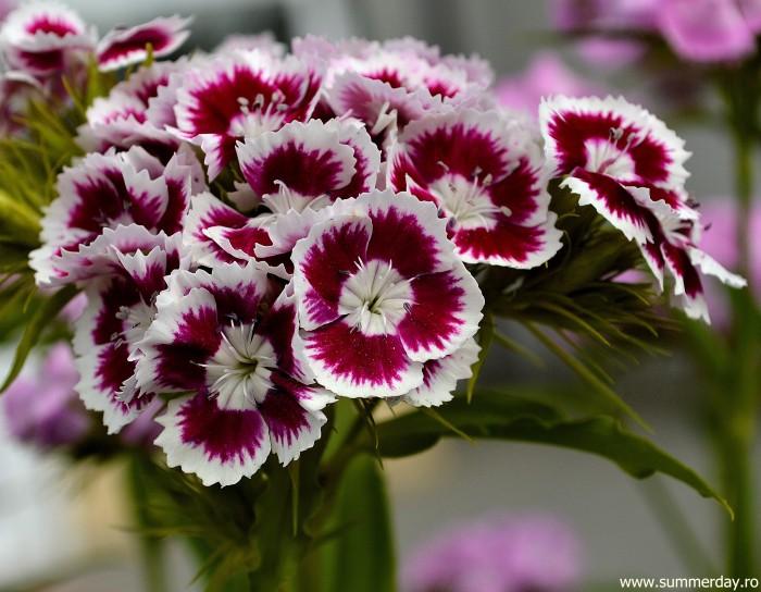 flori-macro