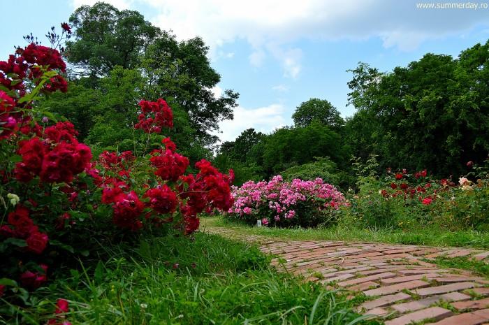 gradina-cu-trandafiri