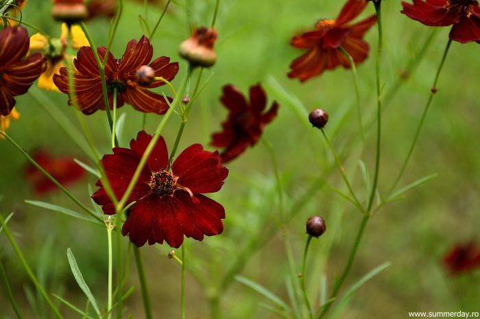 flori-grena