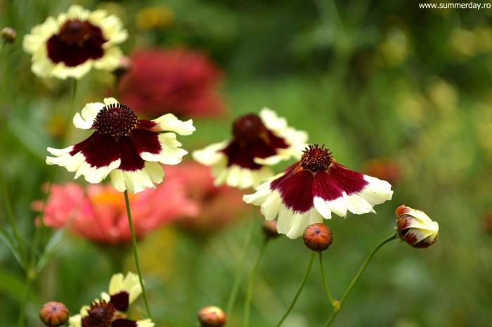 floricele-frumoase