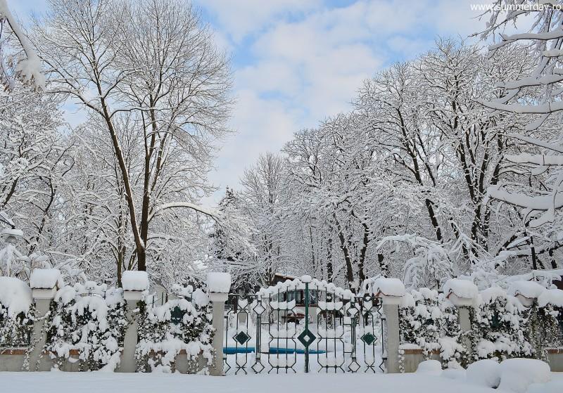 vis-de-iarna