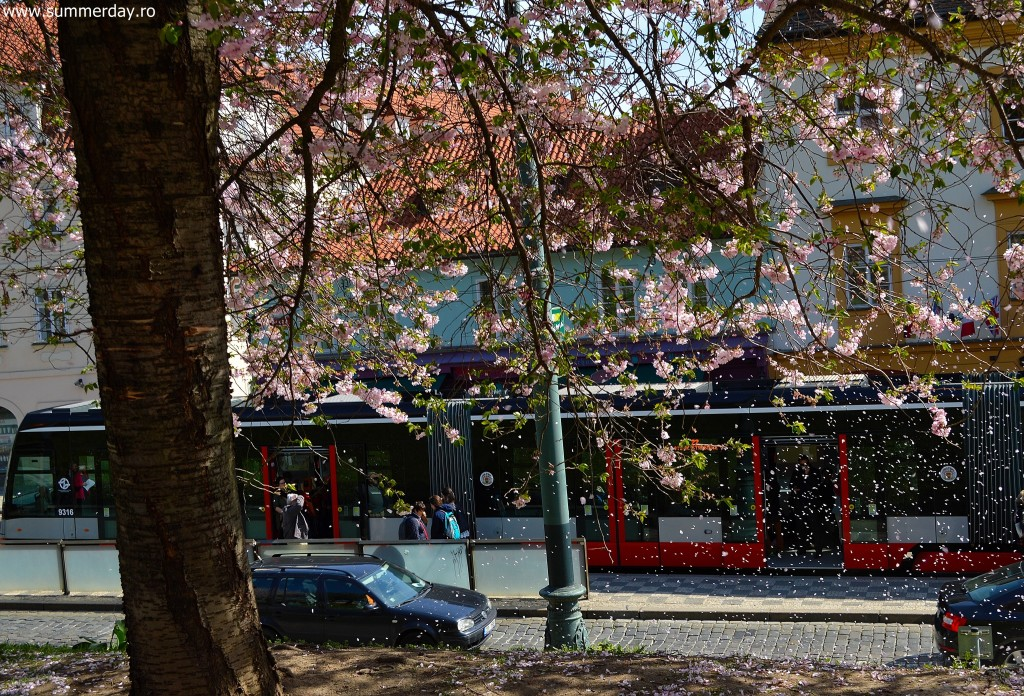 cu-tramvaiul-spre-funicular