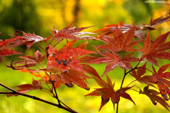 frunze-multicolore-de-toamna