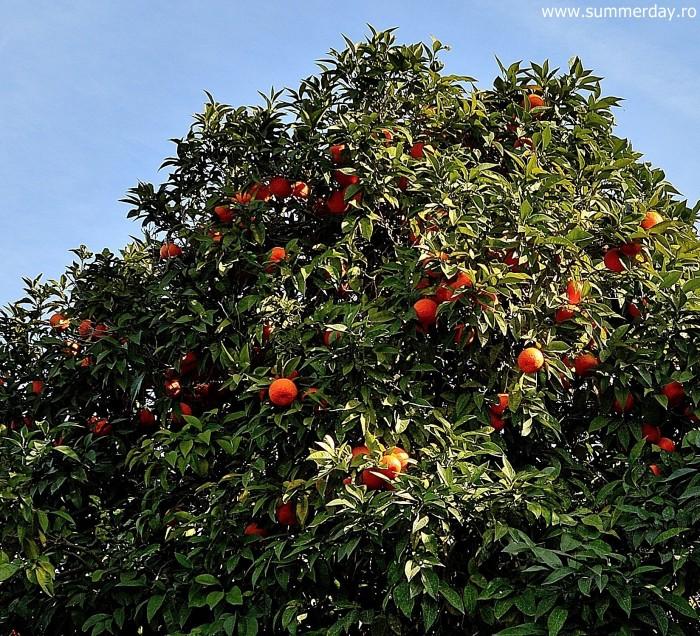 portocale-roma