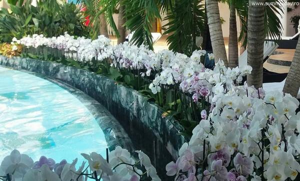 orhidee-therme-bucuresti