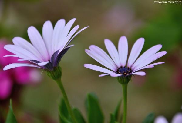 floricele-la-castel