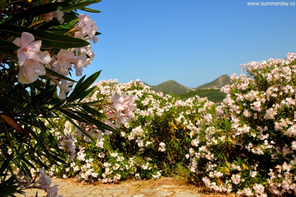 flori-la-castel