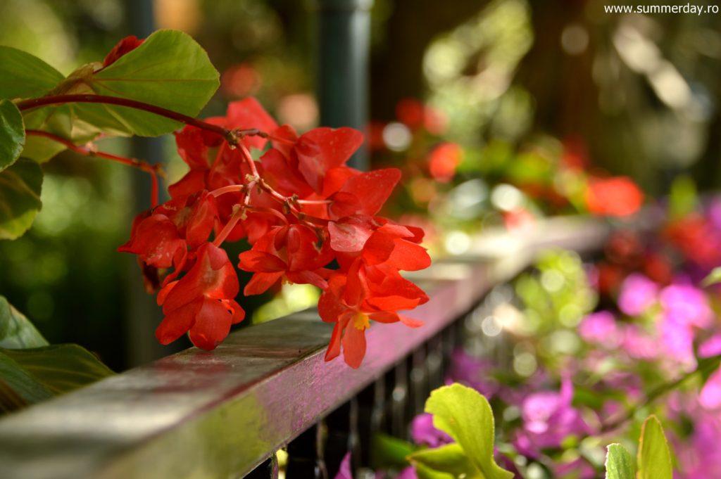 flori-anthousa-parga